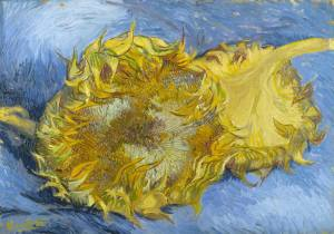 2 cut sunflowers 1887 metrop mus ny
